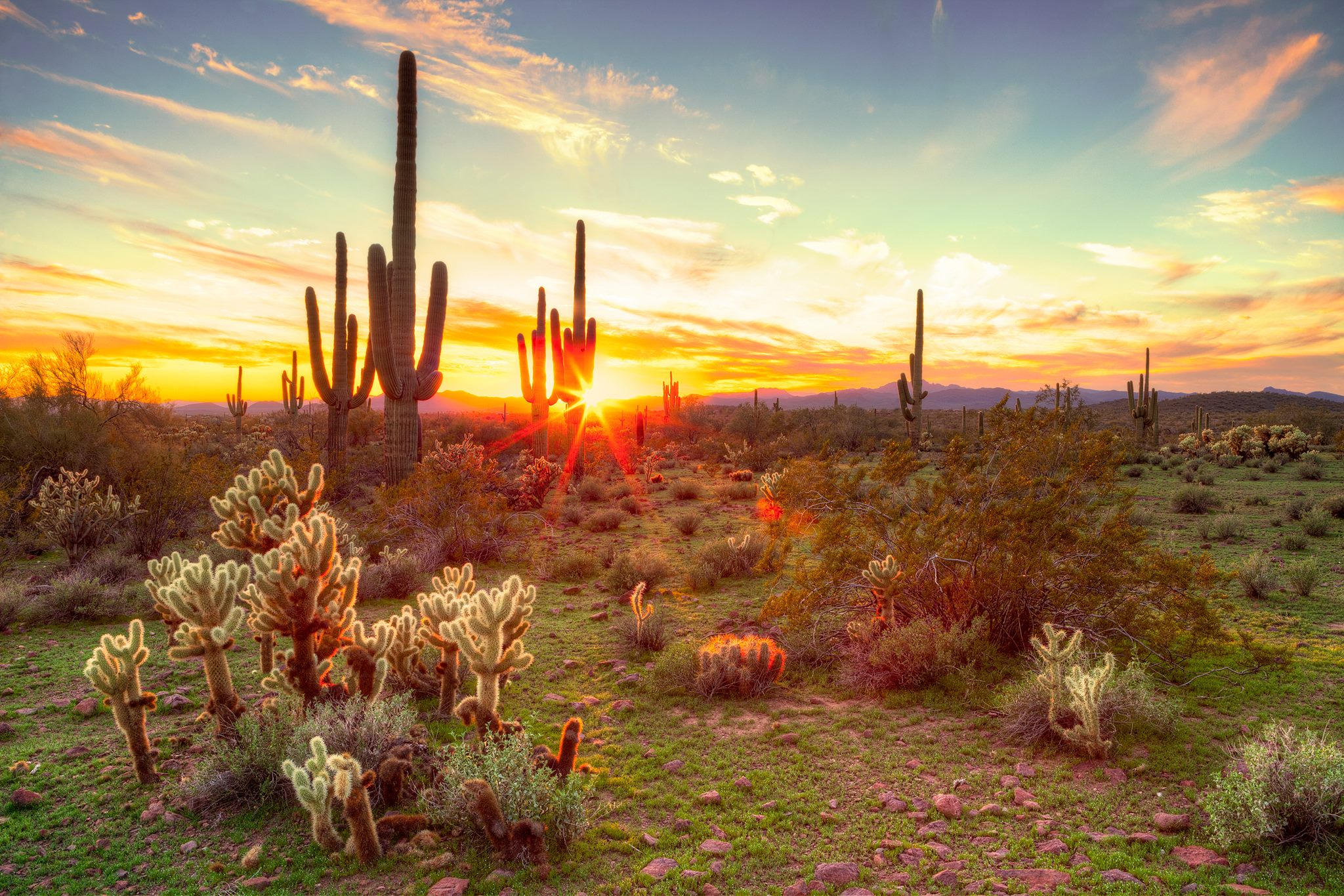 Scottsdale Summers